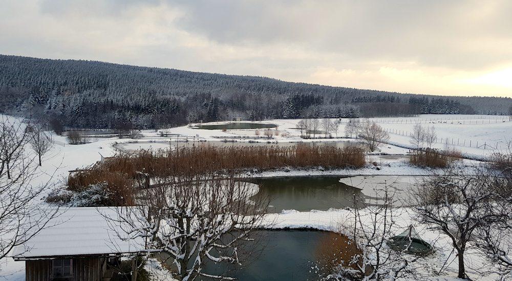 winterliche Aufnahme der Teichanlage